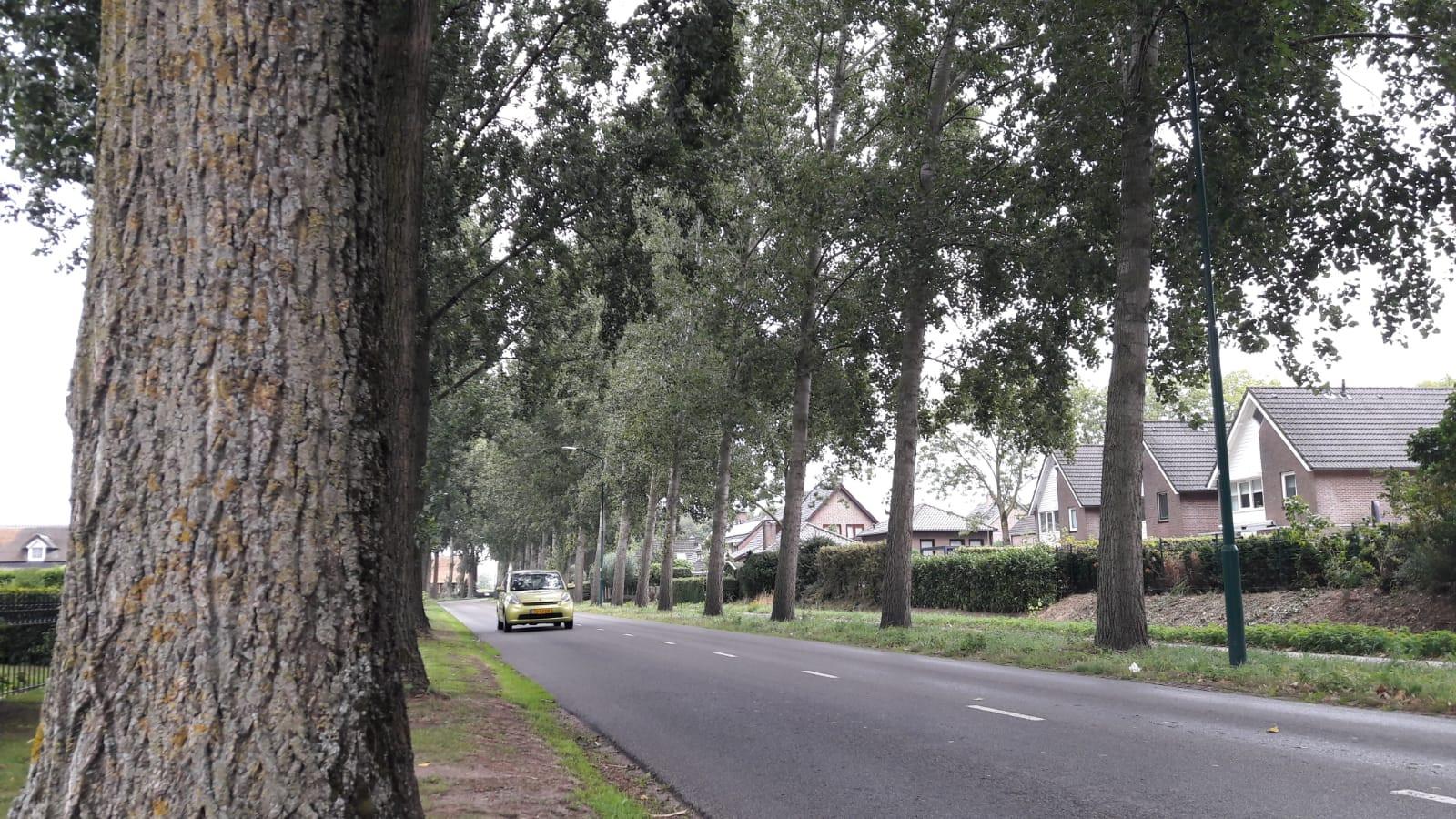 Populieren langs de Kleinussenstraat in Oss vormen volgens omwonenden een gevaar.