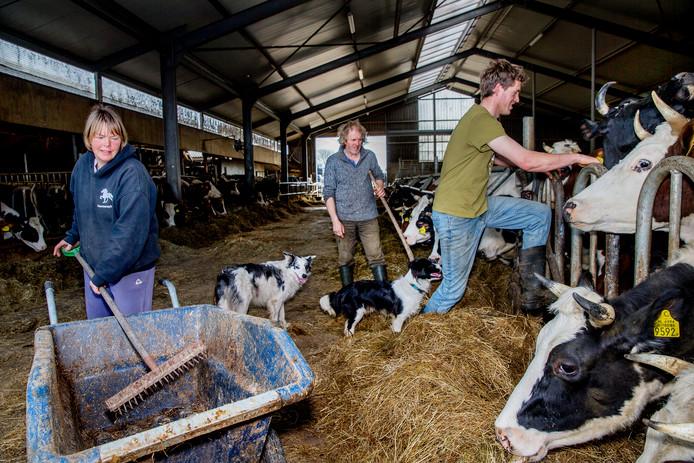 De biologische koeienstal in De Rijp.
