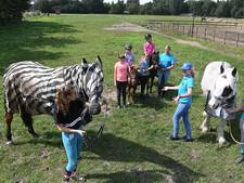 Zebradeken beschermt paarden in Land van Cuijk tegen insectensteken