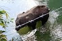 De gewonde olifant zocht het water op en bezweek in de rivier.