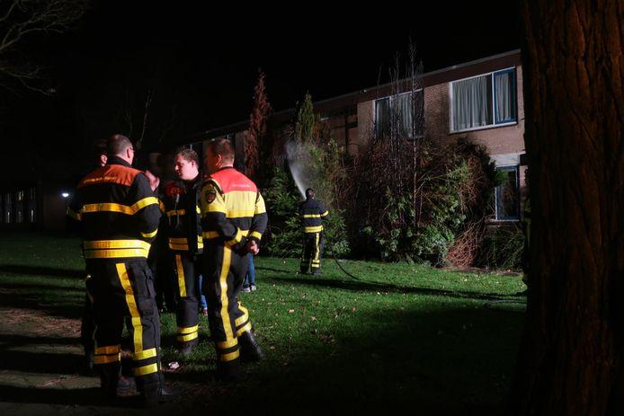 Er stonden opnieuw coniferen in brand.