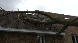 Boom belandt op woning in Melsbroek: geen gewonden, wel aanzienlijke schade aan dak