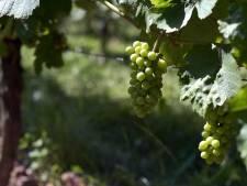 Gentse Rotaryclubs organiseren wijn drive-in ter vervanging van wijnweekend