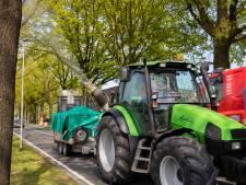 Zuidoost-Brabant gooit extra middelen in de strijd tegen jeukrups