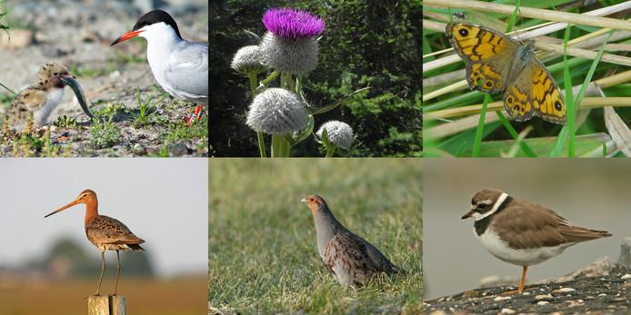 Enkele dier- en plantensoorten die in Zeeland onder druk staan.
