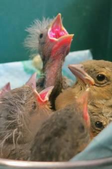 Een leeg nest-syndroom