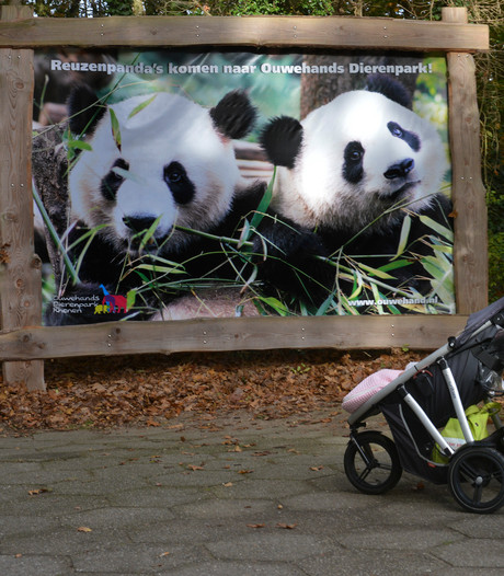 Publieke omroep verwelkomt panda's met eigen journaal