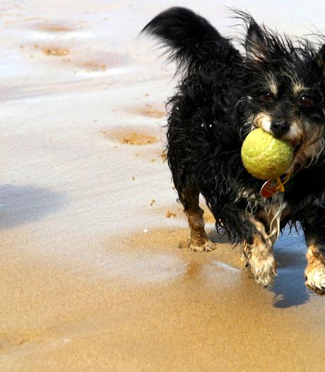 Hondenbelasting in Goes levert meer op, maar tarieven gaan niet omlaag