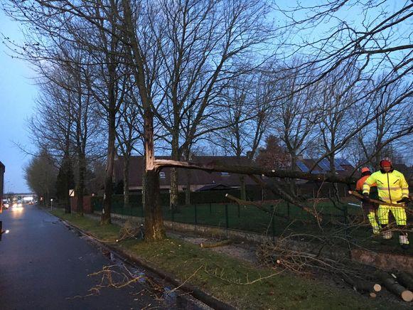In de tuin van Atheneum Bellevue in Izegem kraakte door de felle rukwinden ook een dikke tak van een boom.