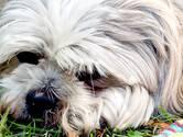 Honden zijn de verbinding met het paradijs. Misschien geldt dat ook voor kinderen