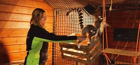 Verzorging 750 dieren in Oliemeulen Tilburg in gevaar door coronacrisis: 'We vragen dringend hulp'