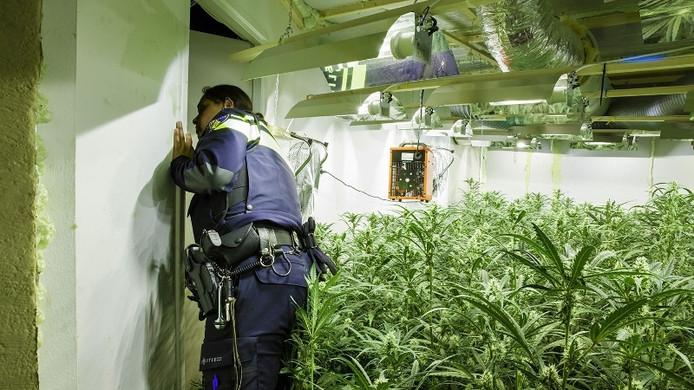 Politie inspecteert een wietkwekerij.