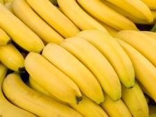 Verwoestende schimmel bedreigt de banaan: vijf vragen aan een bananenexpert