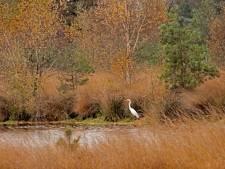 Mooie weer lokt wandelaars en fietsers naar Brabantse natuurgebieden, maar drukte valt mee