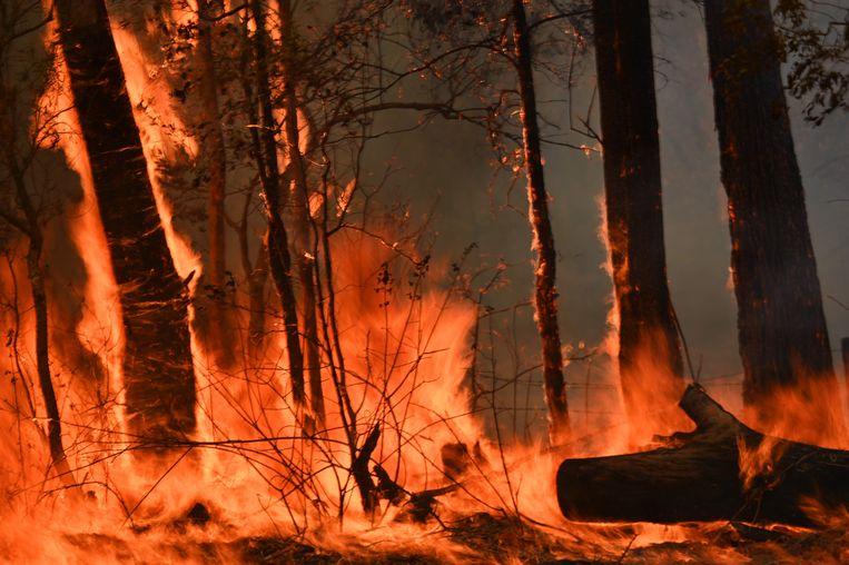 Hevige bosbranden in Taree, 350 kilometer ten noorden van Sydney.