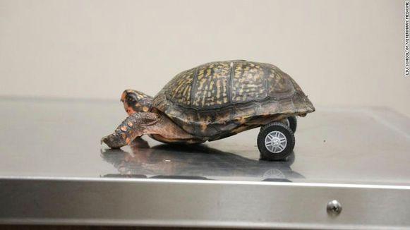 Pedro is sneller dan ooit tevoren op zijn karretje.