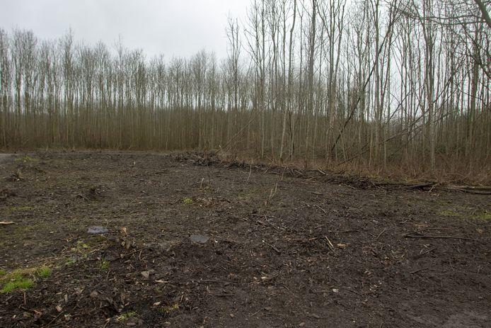 Het rigoureus voor de helft omgekapte Ravense Bos in Hellevoetsluis is het schrikbeeld voor veel Mallebosbezoekers.