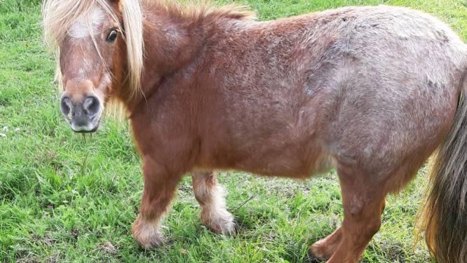 Politie neemt verwaarloosde pony in beslag
