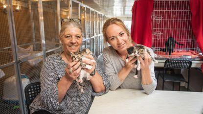 """Poezenboot verwacht babyboom: """"Er zijn de jongste weken amper katten gesteriliseerd"""""""