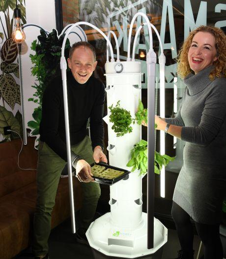 Wordt de verticale moestuin een nieuwe groene revolutie op de vierkante meter?