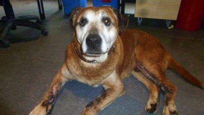 """Zwaar verwaarloosde hond overleden nadat baasjes maandenlang niet omkijken naar huisdier: """"Omer leefde alleen in een krot"""""""