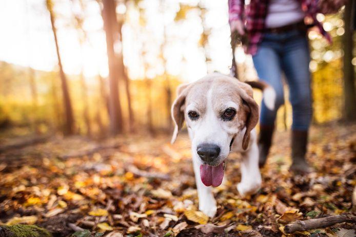 Er is veel ergernis in Heusden over hondenpoep dat niet wordt opgeruimd.