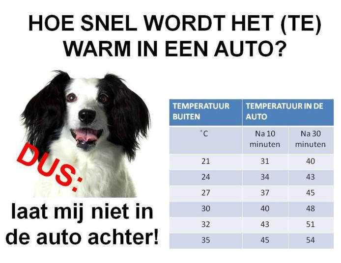 Zo snel lopen de temperaturen op in een auto.