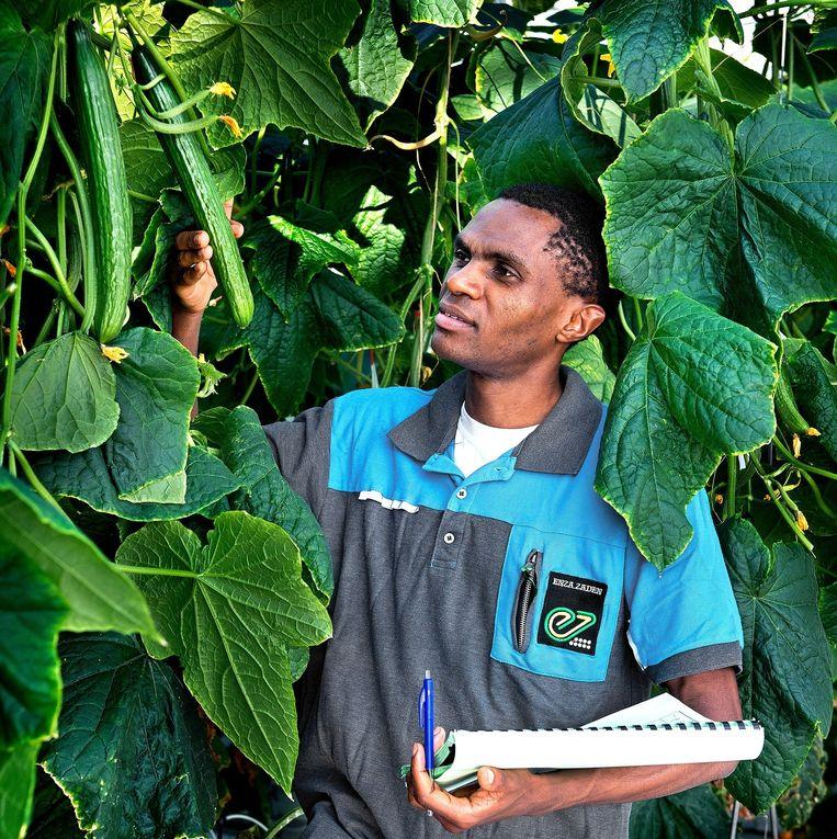 Uwiragiye Ambroise in de komkommertuin. Beeld Klaas Jan van der Weij