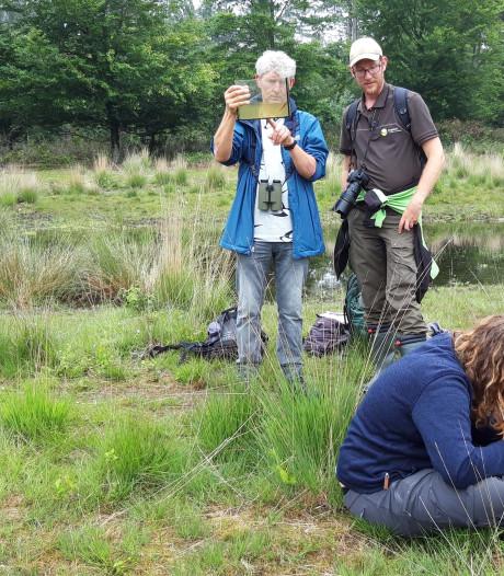 Record van 1223 verschillende soorten planten en dieren geteld in de Maashorst