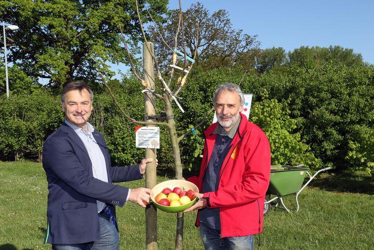 Burgemeester Luc Peetermans en Paul Van Laer van de boomgaardenstichting bij de appelboom.