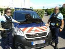 La gendarmerie mobilisée pour une panthère... en peluche