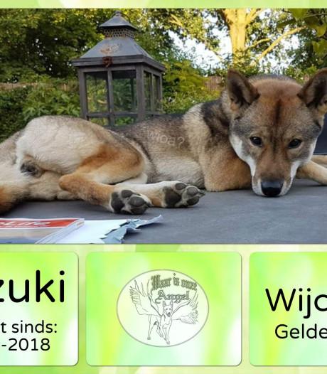 Hond Mizuki schrikt van vuurwerk, zoekactie met speurhonden in Wijchen