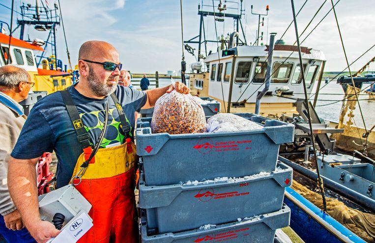 De garnalenvisserij gaat volgens de Waddenvereniging gepaard met stevige bijvangst en netten die over de zeebodem worden gesleept. Beeld Frank de Roo