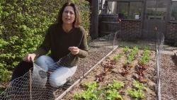 'Hoe tuinafval een geweldig hulpmiddel wordt'