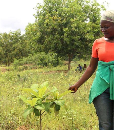L'Uliège va planter un arbre pour chaque nouvel étudiant inscrit