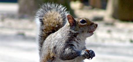 Veel eekhoorns en eikels maar weinig libellen en Siberische vogels: dit kunnen we van de herfst verwachten na de droge zomer