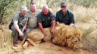 VIDEO. Undercoveroperatie toont boerderijen waar duizenden leeuwen worden gekweekt om afgemaakt te worden door rijke jagers