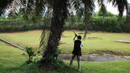Gas, gif en kogels tegen de vogels in Singapore