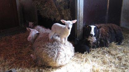 Kinderboerderij heropent de deuren