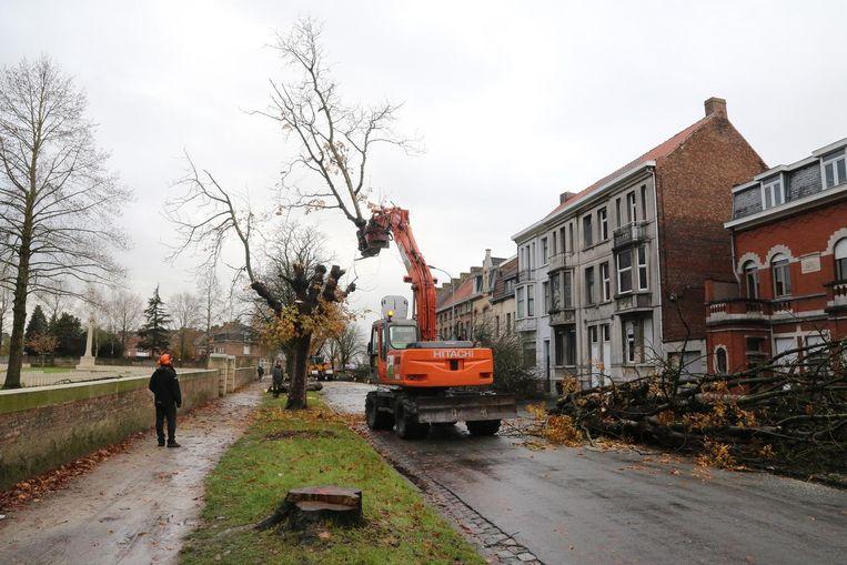 De zieke bomen in de Plumerlaan in Ieper worden verwijderd.