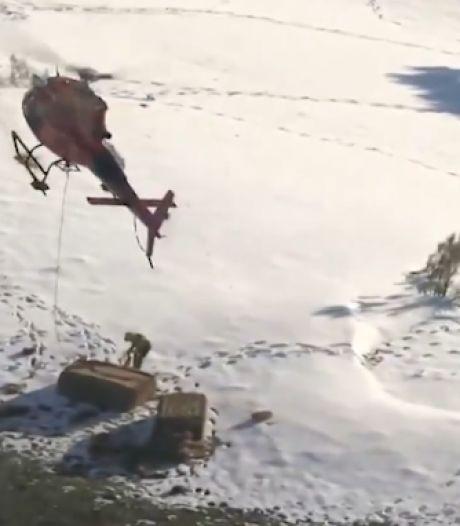 Les secours larguent de la nourriture par hélicoptère pour les vaches isolées par la neige