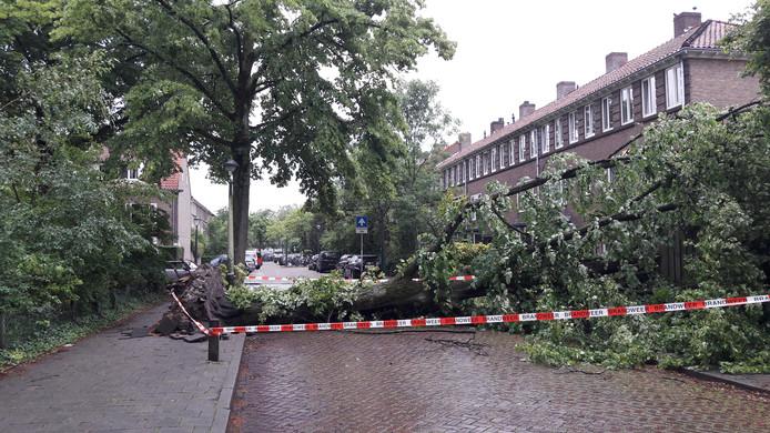 Omgevallen boom in de Sint-Adrianusstraat in Eindhoven.
