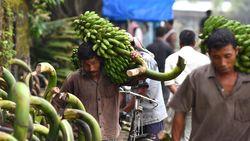 Dreigt het einde van de banaan? FAO luidt de alarmbel