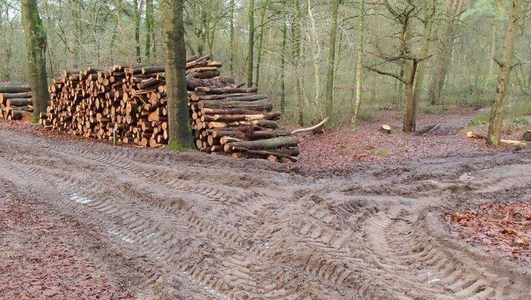 Houtkap in de bossen bij Rhenen. Beeld Michael Backus