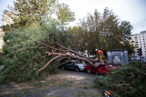 Omgevallen bomen in Rome.