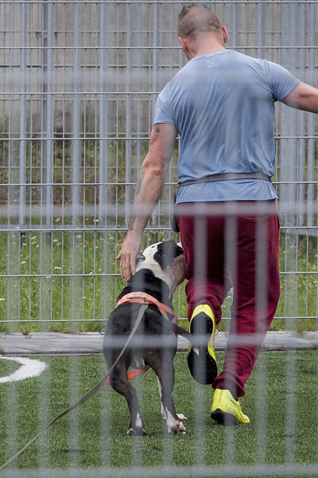 Gedetineerden in Karelskamp Almelo trainen asielhonden