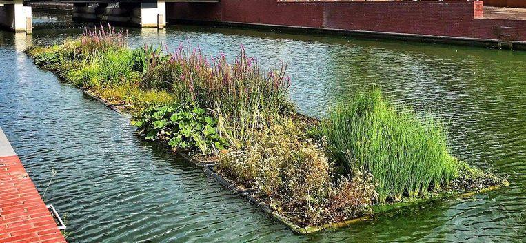 Een voorbeeld van een drijvende tuin. Voor alle duidelijkheid: dit is niét de tuin die aan de verlaagde Leieboorden op de Leie komt, enkel een voorbeeld