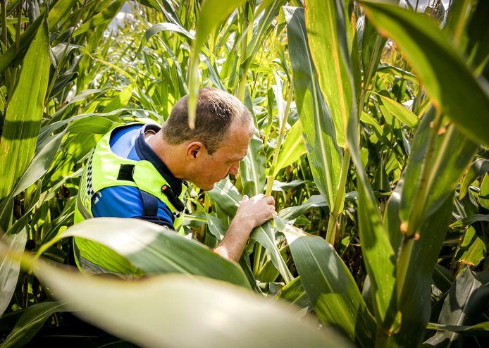 Foto ter illustratie. Niels M. (33) uit Kampen belandde met de Porsche van zijn werkgever op de kop in een maisveld bij Elburg. Zijn 41-jarige bijrijder uit Dronten overleefde die klap niet.