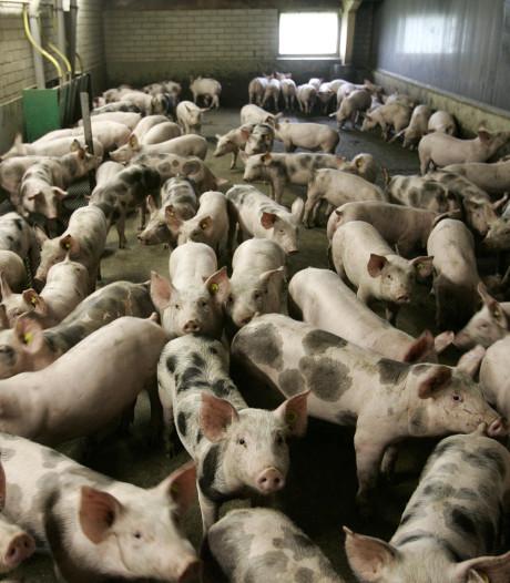 Nieuwe megastal Knorhof valt zeker nog tegen te houden, zegt milieuraadsman