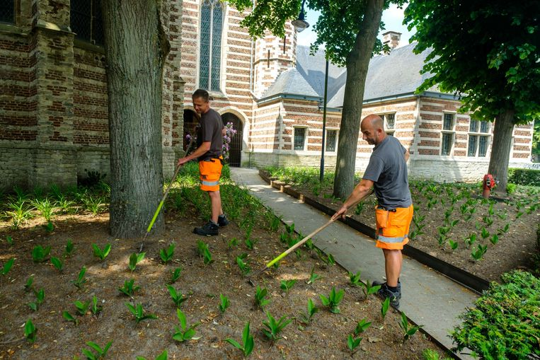 Medewerkers van de groendienst hebben een bloemenperk aangelegd aan de achterzijde van de kerk in het centrum van Kontich.